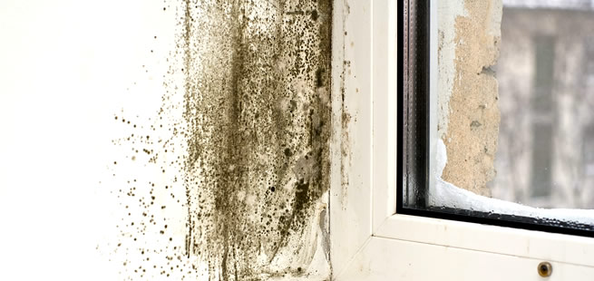 mold-removal-dry-wall